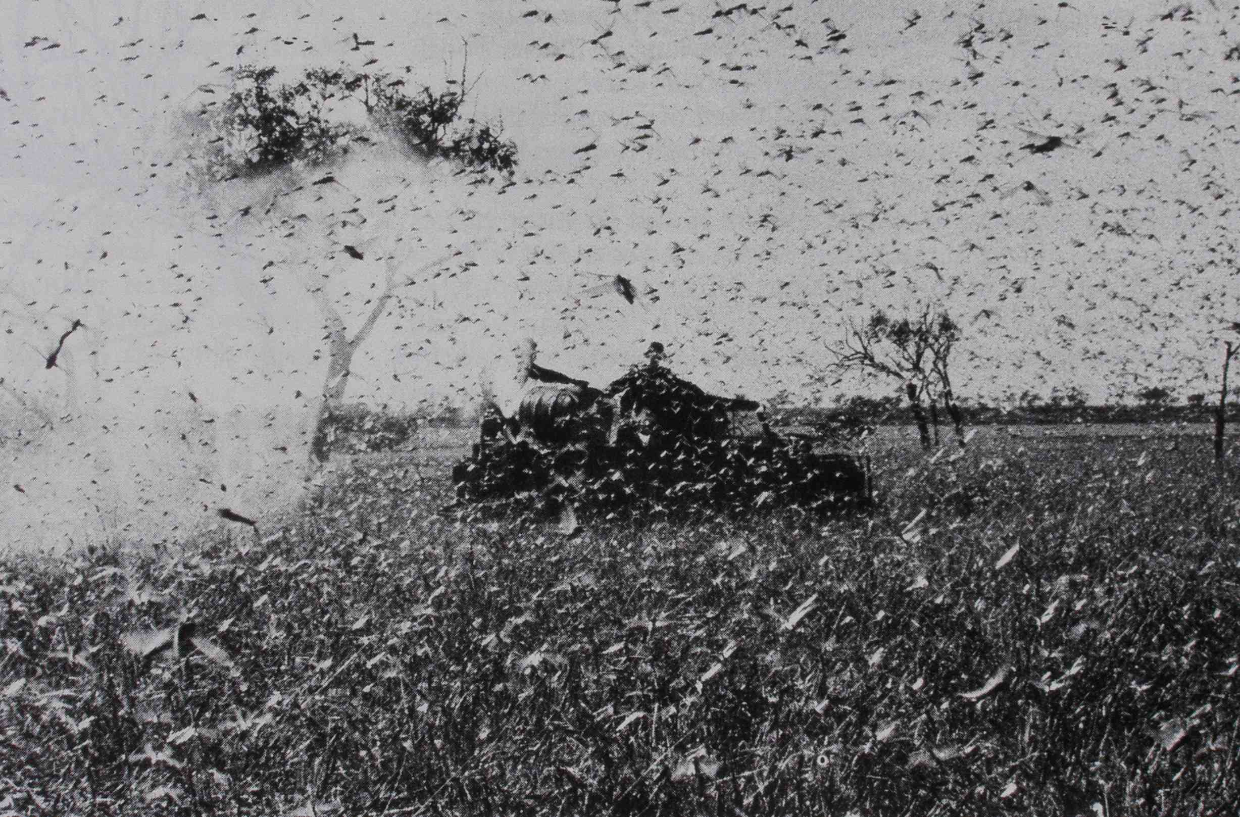 What happened to the locusts?